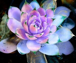 amazing, blue, and plant image