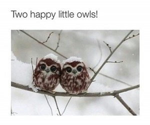 bird, happy, and owls image