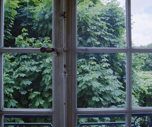 nature, window, and tree image