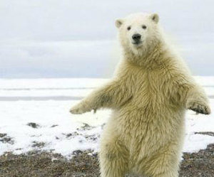 bear, funny, and snow image