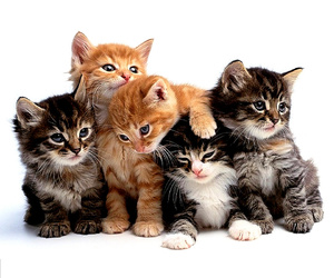 group, kittens, and cute image