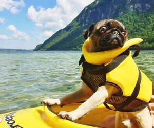 adorable, dog, and kayaking image