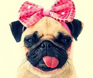 dog, pink, and pug image