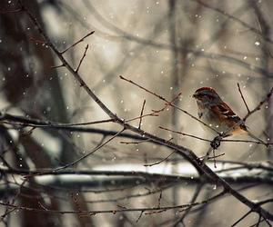 bird, snow, and tree image