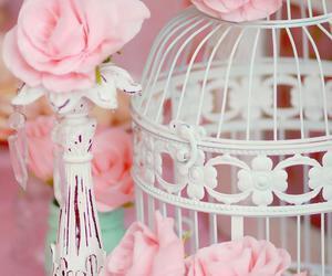 birdcage image
