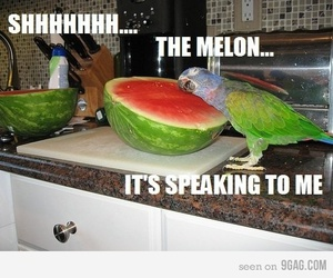 funny, parrot, and watermelon image