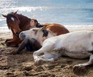 beach, fantastic, and horses image