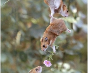 flowers, funny, and hamster image