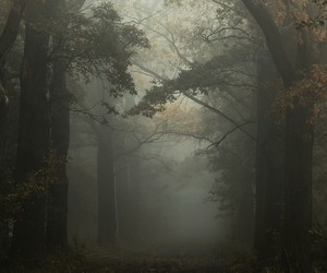 forest, dark, and alone image