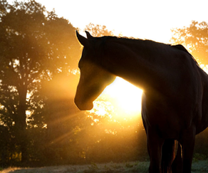 horse, sun, and animal image