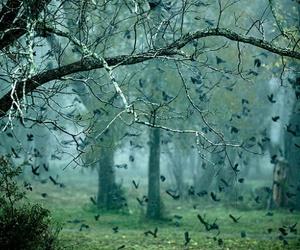 bird, tree, and nature image