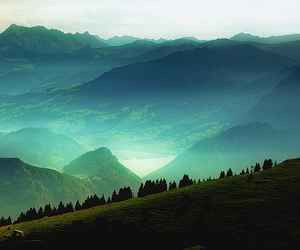 tree, mountains, and green image