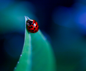 lady bug, ladybug, and cute image