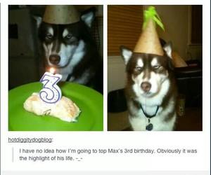 birthdays, dogs, and tumblr posts image