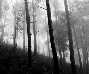 black and white, forest, and chiangmai image