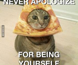 cat, pizza, and apologize image