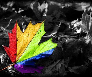 colors, leaves, and rainbow image