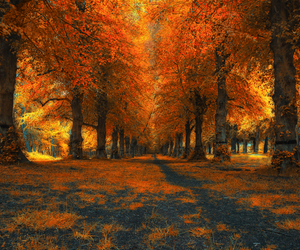 orange and trees image