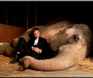 robert pattinson, elephant, and water for elephants image