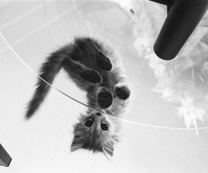 black and white, cats, and kitten image