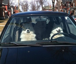 dog, car, and funny image