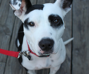 dog, mix, and pointer image