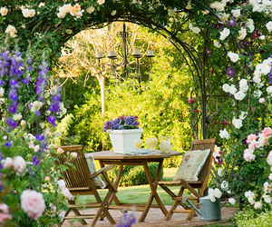 garden, flowers, and rose image