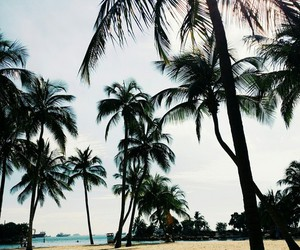 beach, palms, and photography image