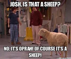 funny, sheep, and tvshow image