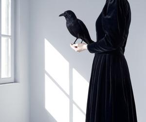 bird, black, and dress image