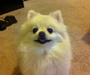 animal, funny, and puppy image