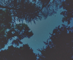 cool, trees, and grunge image