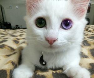 cat, eyes, and white image