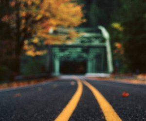 photography, road, and autumn image