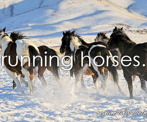 animals, graceful, and horses image