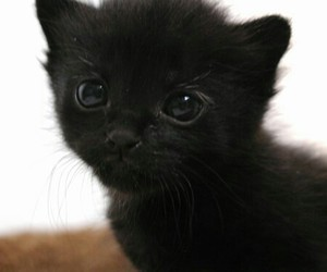 cats, kittens, and pets image