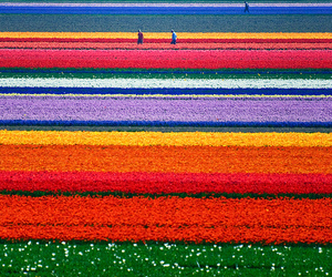 colorful, photography, and rainbow image