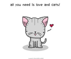 cat, love, and sweet image