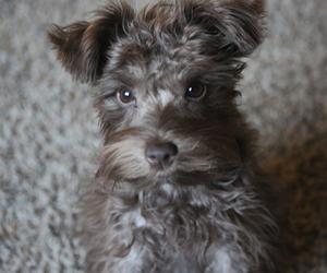 adorable, animal, and chocolate image