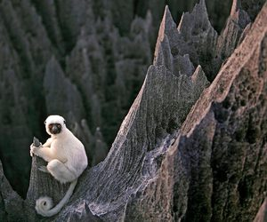 monkey, animal, and lemur image