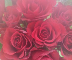 rose rouge amour image