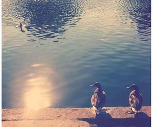 autumn, budapest, and duck image