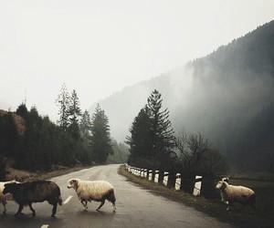 mountains and sheep image