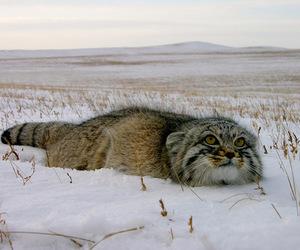 animals, cat, and nature image