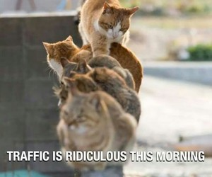 cat and traffic image