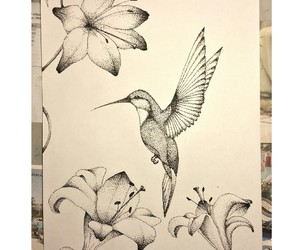bird, points, and drawing image