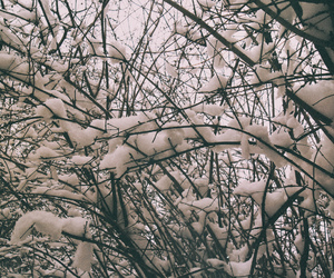 cold, inspiration, and tree image