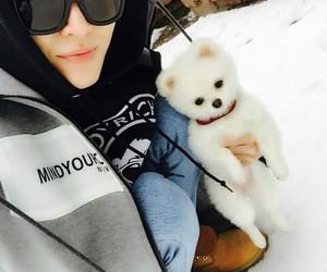 boy, dog, and korean image
