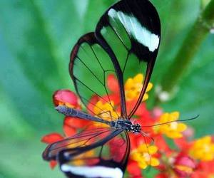 beauty, butterly, and love image