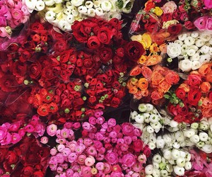flowers, beautiful, and colors image